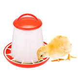 Chicken Feeder Drinker Bottles Poultry Feed Water Waterer Automatic Drink Bird Grid
