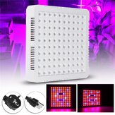 300W LED Grow ضوء Hydroponic Full Spectrum For Veg Flower Indoor Plant Seeds